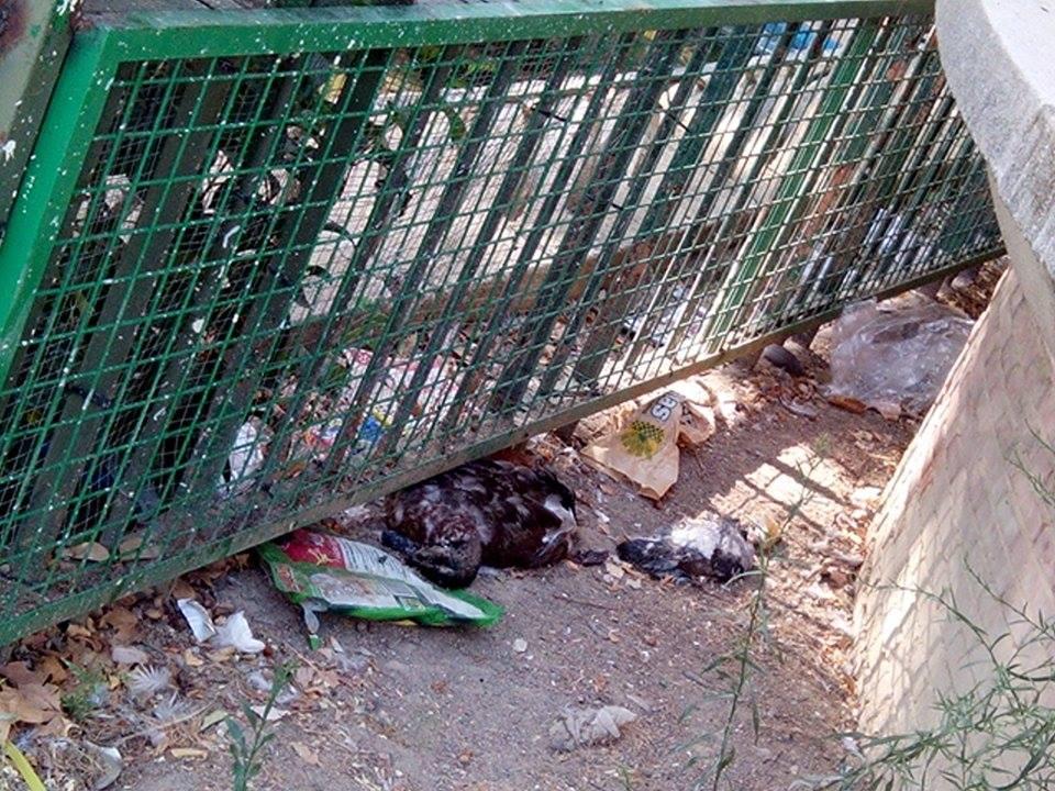 Patos Muertos Y En Descomposicion En El Parque De La Concordia