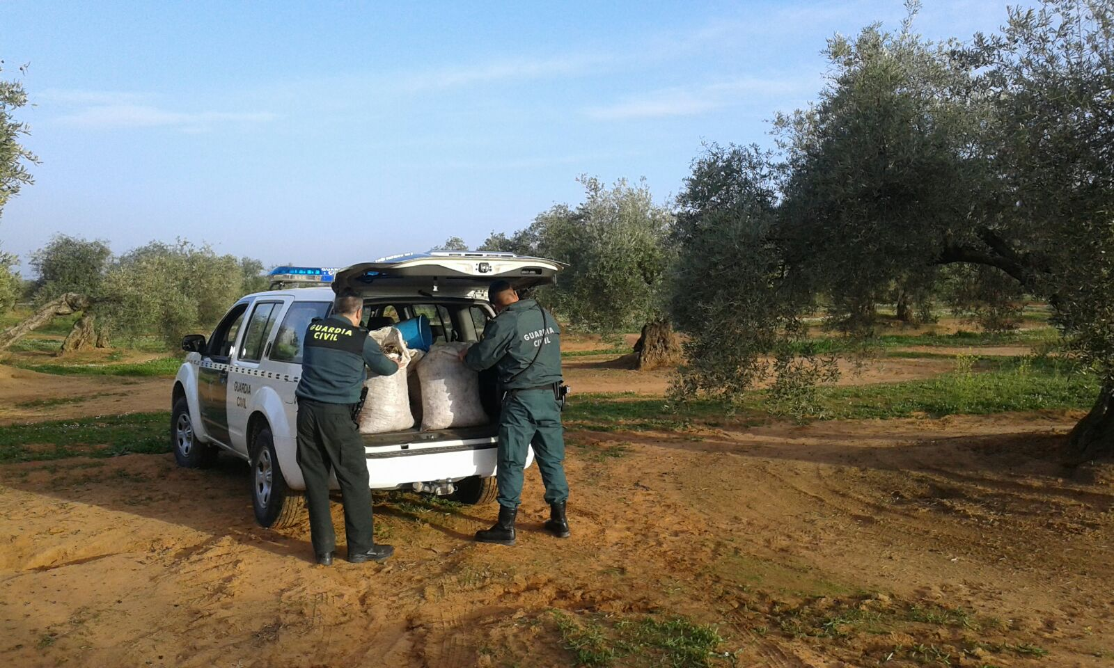 Agentes de la Guardia Civil recuperan aceituna robada.