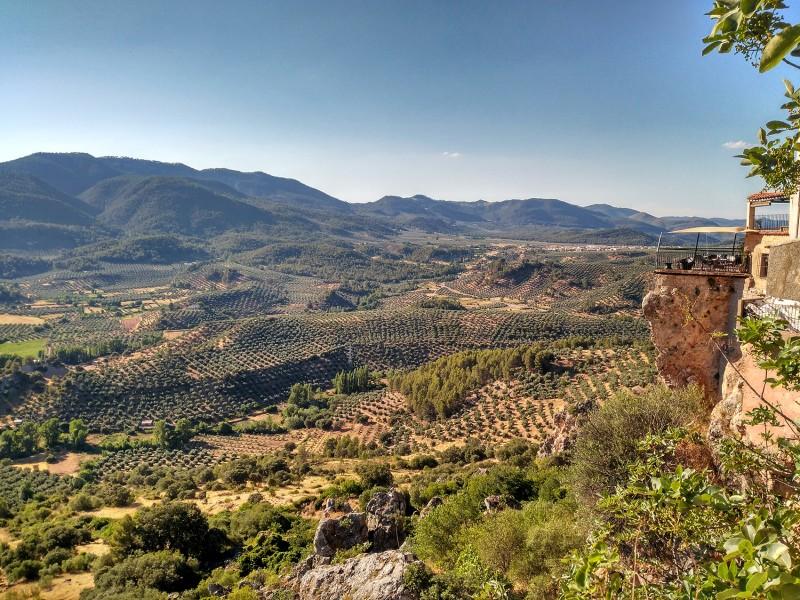 Olivar de la Sierra de Segura
