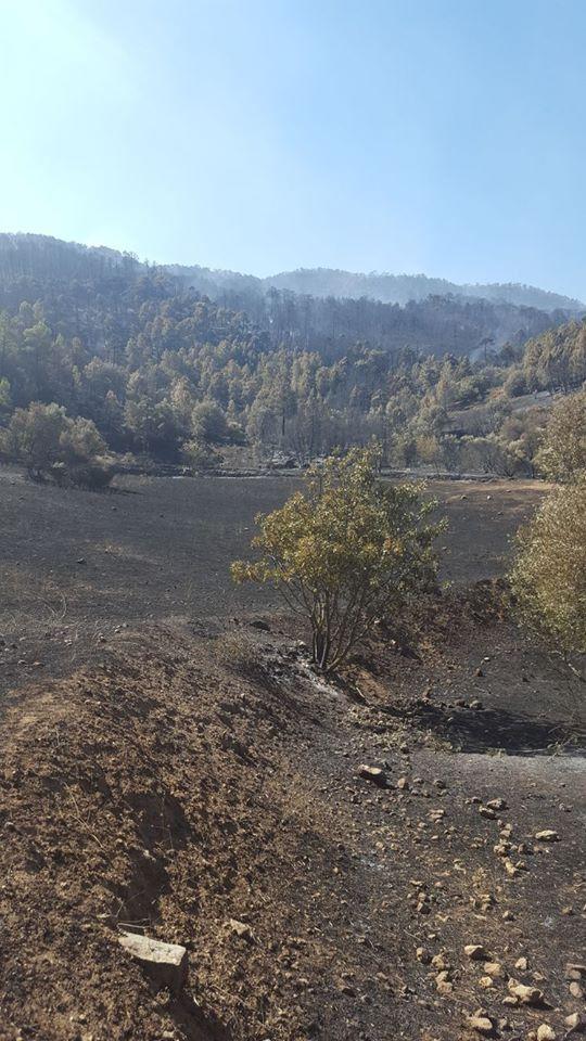 Este fue uno de los puntos donde comenzó el incendio de Segura de la Sierra.