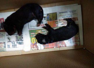 Los dos cachorros muertos en Martos