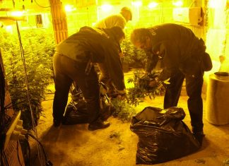 La Guardia Civil requisa las plantas de marihuana.