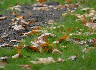 Hojas caídas en el suelo tras las últimas lluvias el pasado 4 de noviembre. FOTO: HoraJaén