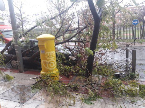 Destrozos de ayer provocados por el viento en el Bulevar. FOTO: HoraJaén