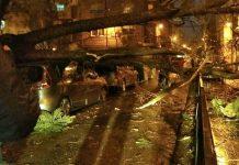 Árbol caído sobre el vehículo en plaza Colón.