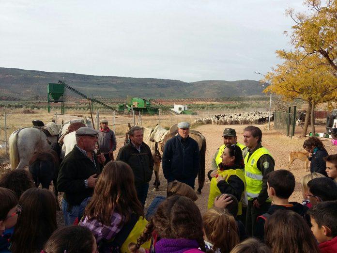 Escolares conocen la trashumancia desde cerca en la comarca de El Condado.
