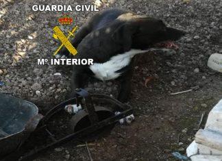 Al perro atrapado en un cepo en Alcalá la Real.