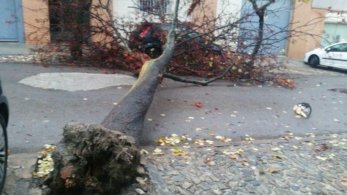 Un árbol ha quedado cruzado en mitad de la calzada en la calle San Marcos. FOTO: Ángel Almagro.