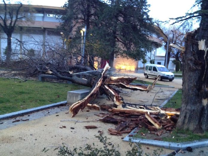 Árbol roto en la Alameda. FOTO: Juanjo Jódar