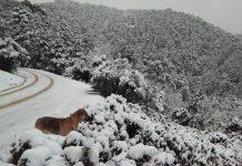 Nieve en el parque natural de Cazorla, Segura y Las Villas.
