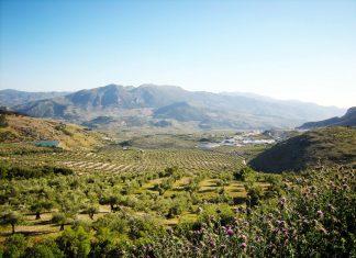Paisaje olivarero de Sierra Mágina.