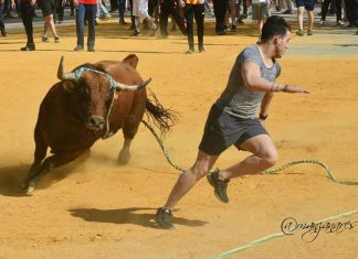 Uno de los toros ensogados de Beas de Segura. FOTO: Juan Manzanares