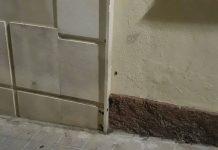 Las cucarachas salen cuando llega la noche trepando por las paredes de los edificios.
