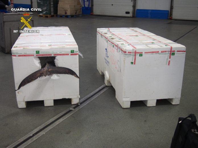 Cajas donde venían los atunes sin ningún tipo de registro ni de calidad ni origen.