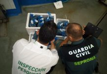 Moluscos inmaduros incautados por la Guardia Civil en Guarromán.