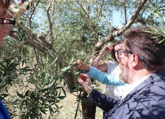 El consejero de Agricultura visita los olivares de Alcaudete.