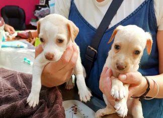 Dos de los animales sí han sobrevivido en el interior de un contenedor. FOTO: Huellas de Jaén