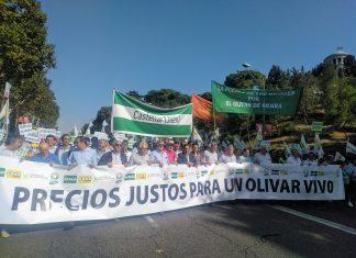 Olivareros jiennenses en la manifestación de Madrid. FOTO: Asaja