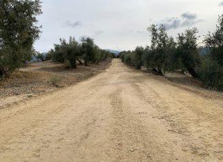 Camino rural de Torres.