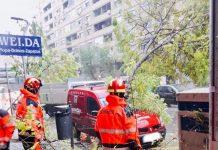 Bomberos de Jaén actúan tras la caída de árboles en Avenida de Andalucía.