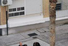 Policías sancionan a varios jóvenes que estaban en una plaza en el polígono El Valle.