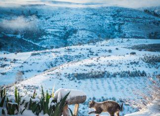 Una gato, esta mañana, en Santiago-Potones nevado. FOTO: Abel Antonio Jimenez