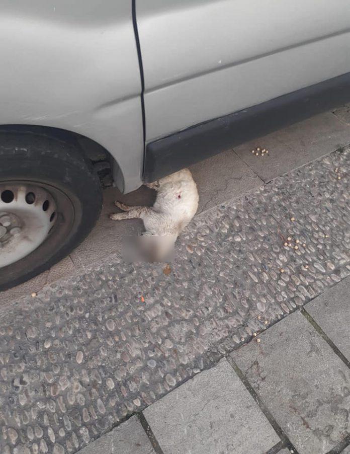 Imagen del gato con una herida en el lomo. FOTO: Asociación Gatetes