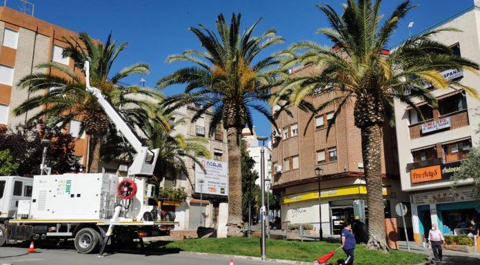 Tratamientos de palmeras contra el picudo rojo en Jaén.