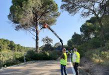 Trabajos de poda en la A-6177 en Andújar.