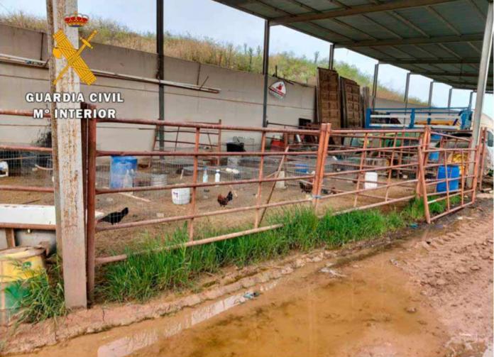 Zona donde se robaron los gallos.