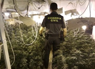 Plantación de marihuana en Mengíbar.