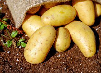 patatas-sierrasegura-horajaen