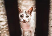 gato-callejeron-horajaen-quesada
